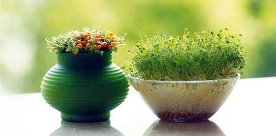 درست کردن سبزه عید برای سفره هفت سین