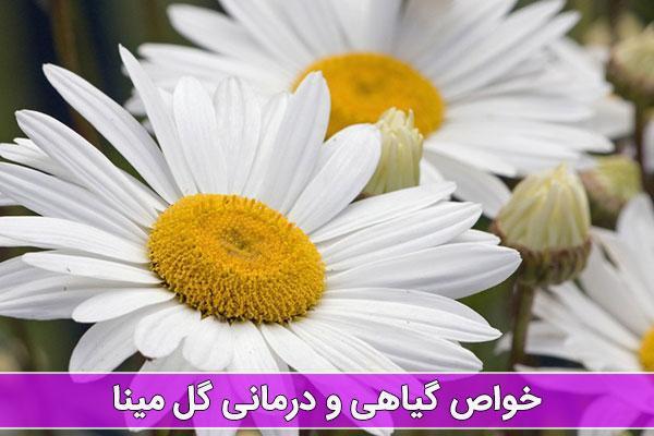 آشنایی با خواص گل مینا و کاربردهای درمانی آن