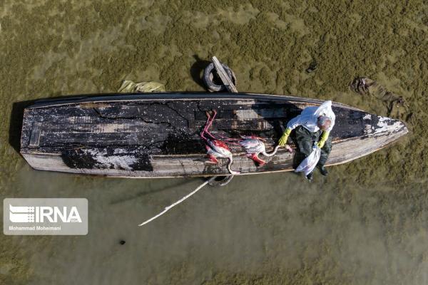 خبرنگاران ادامه داستان غم انگیز تلفات پرندگان میانکاله
